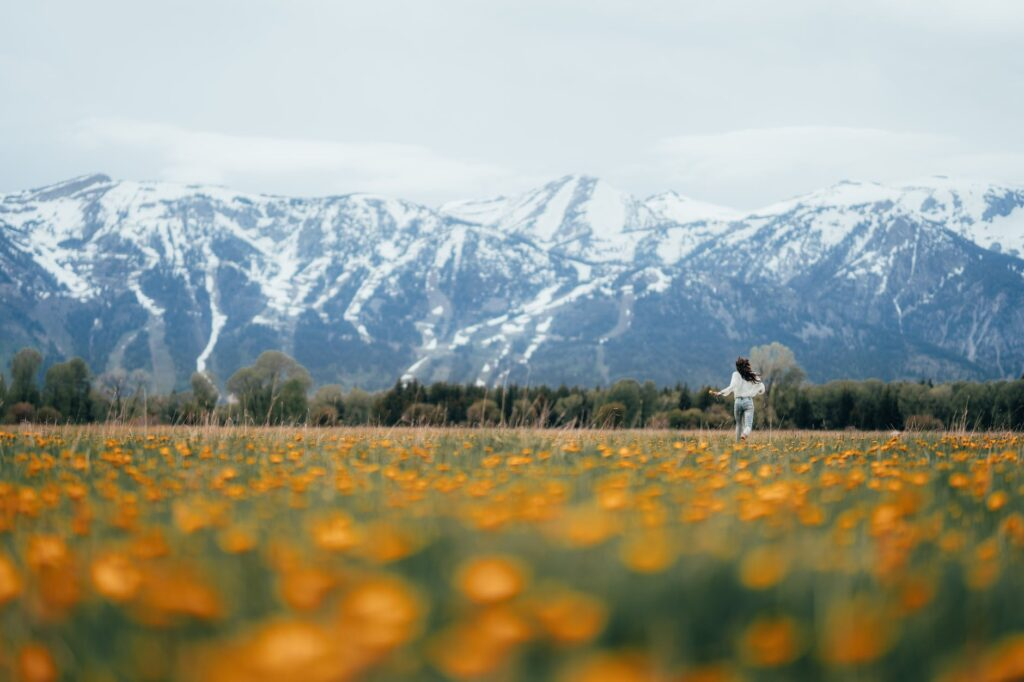 yellow flower field near snow covered mountain